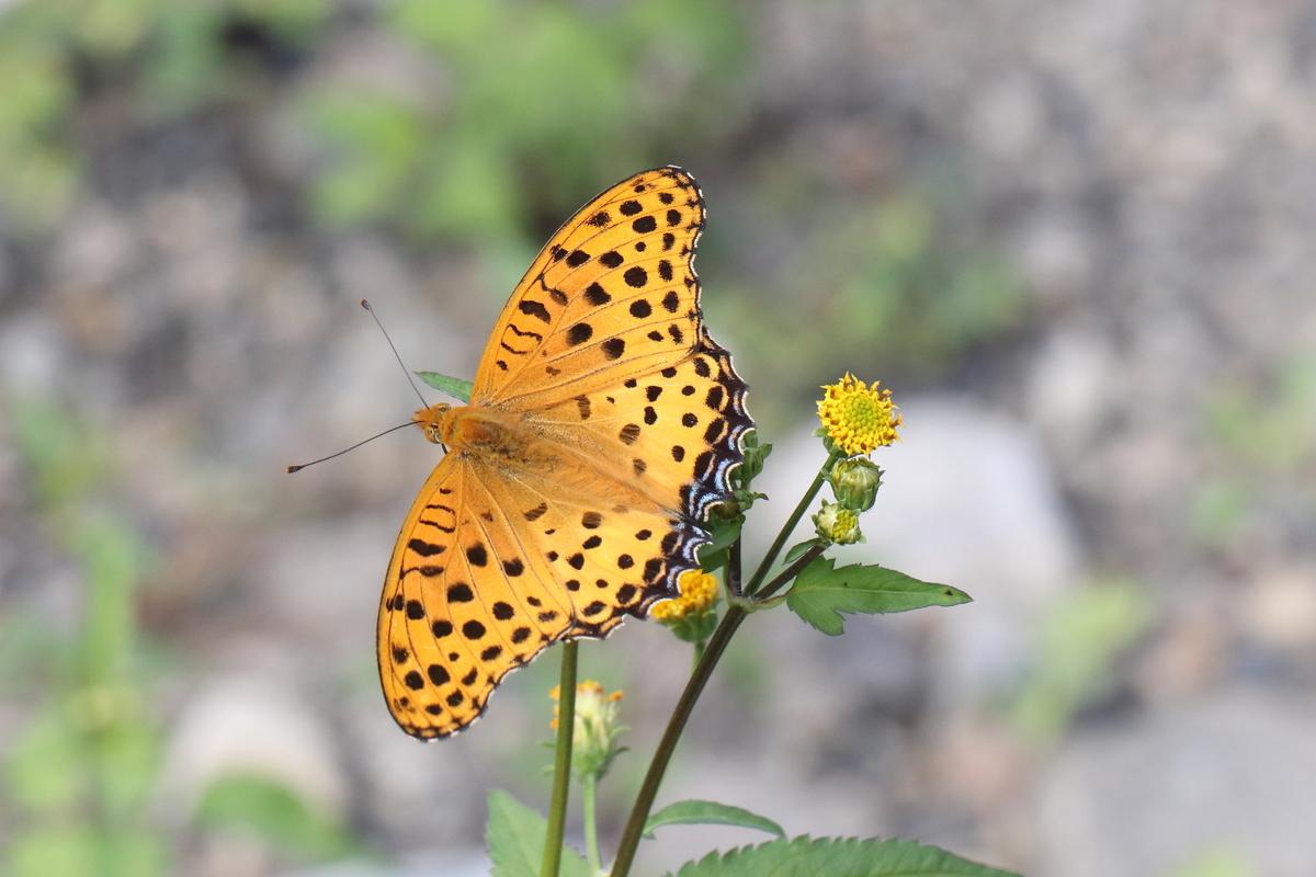 f:id:butterflyer:20190915212237j:plain