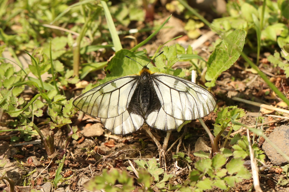 f:id:butterflyer:20191125231341j:plain