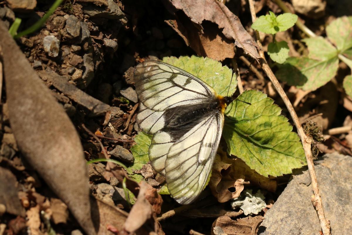 f:id:butterflyer:20191125231622p:plain