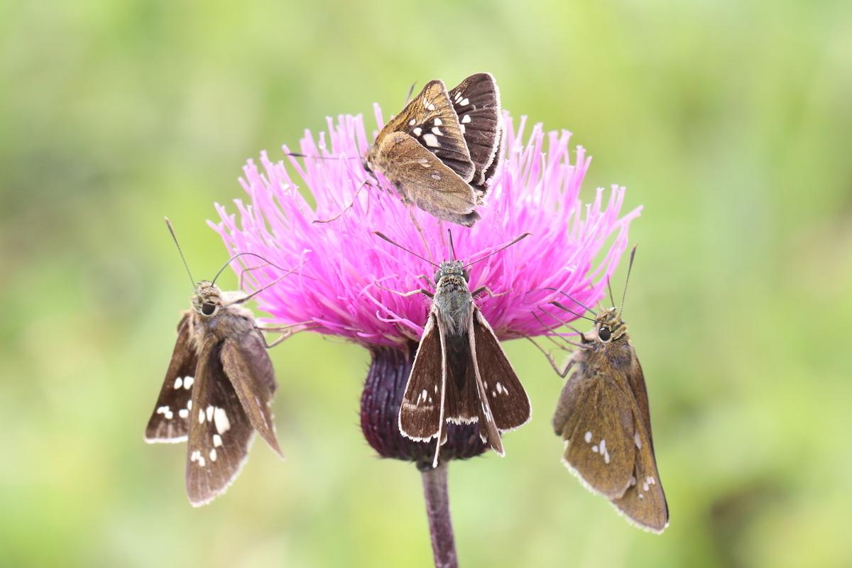 f:id:butterflyer:20191202232517j:plain