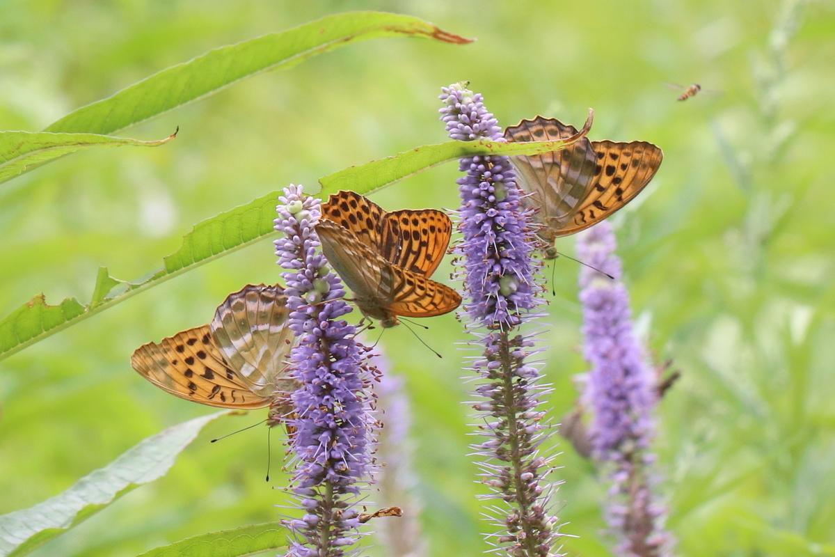 f:id:butterflyer:20191209210011j:plain