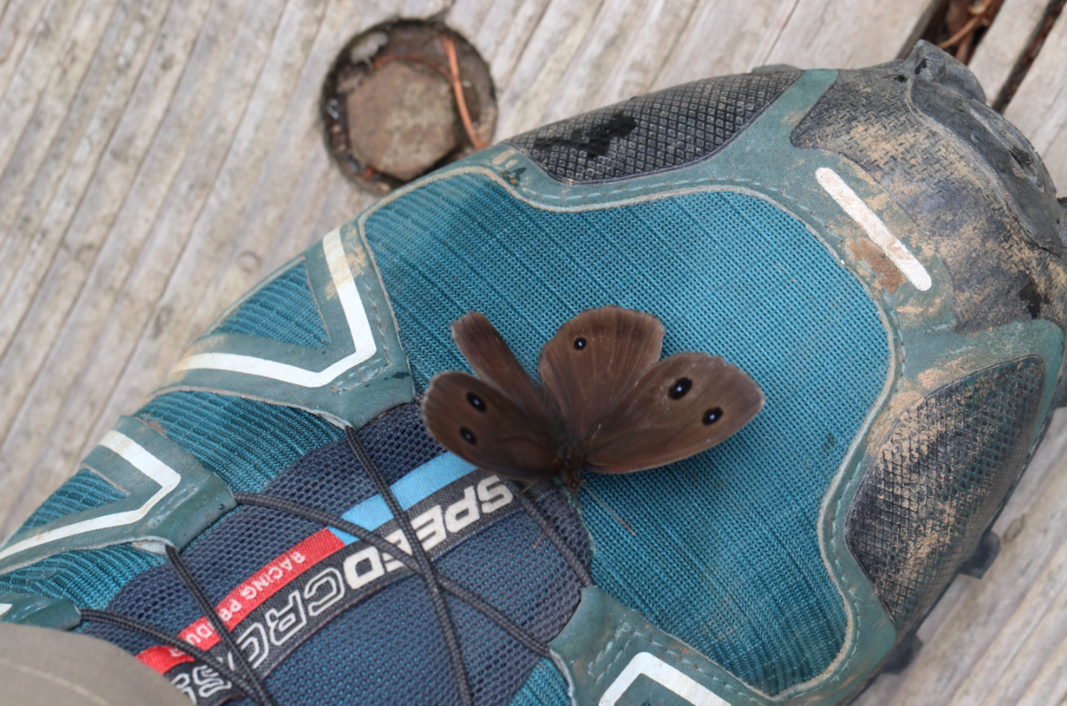 f:id:butterflyer:20191209210206p:plain