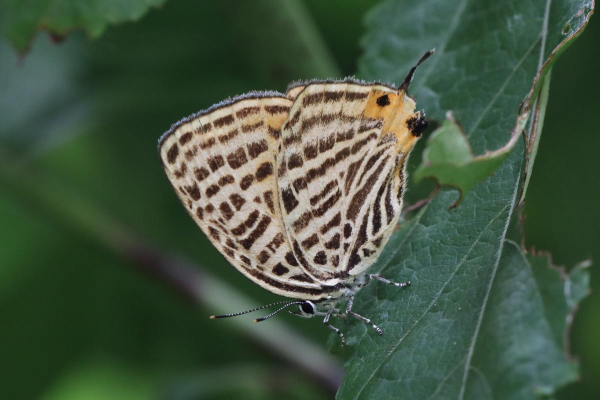 f:id:butterflyer:20191219235202j:plain