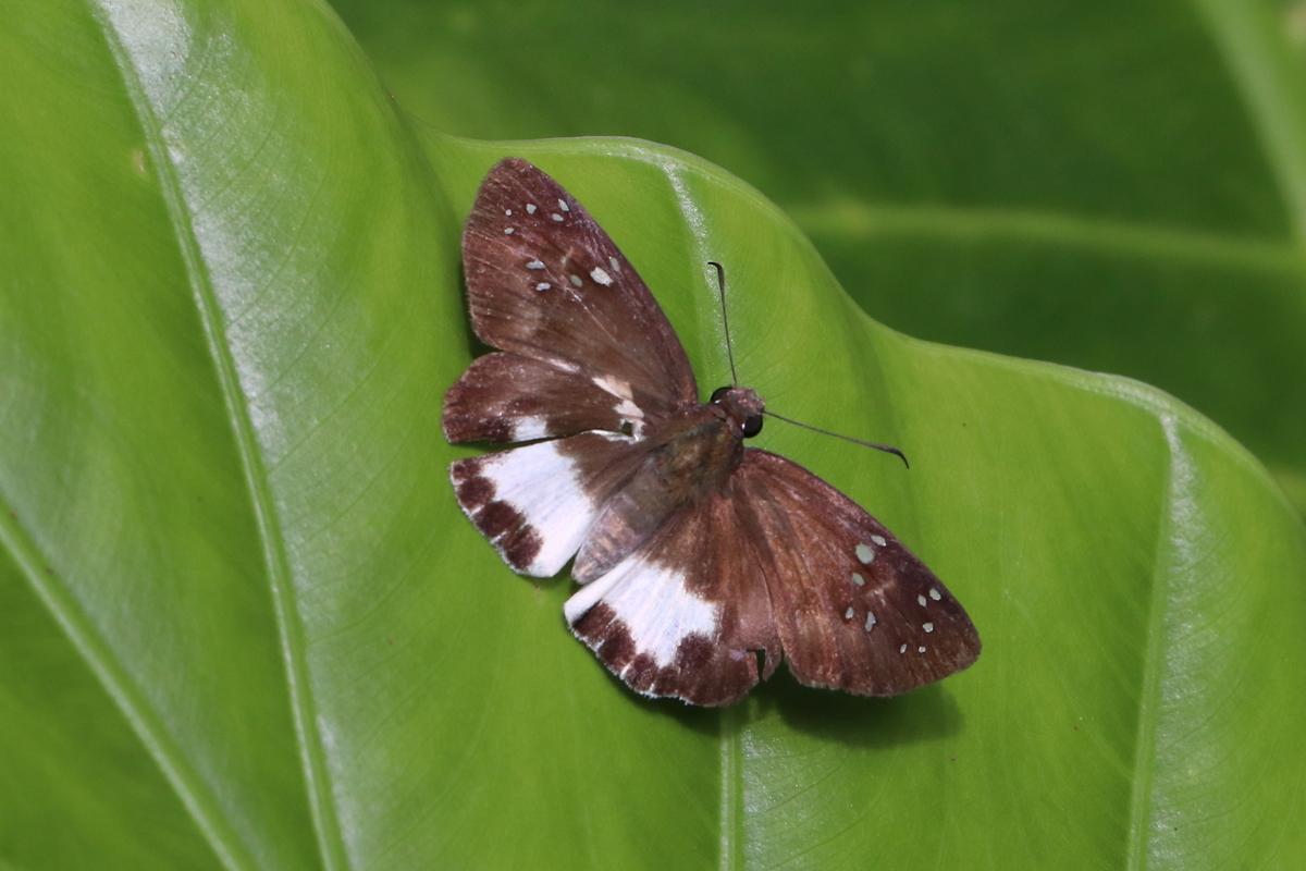 f:id:butterflyer:20200104222609j:plain
