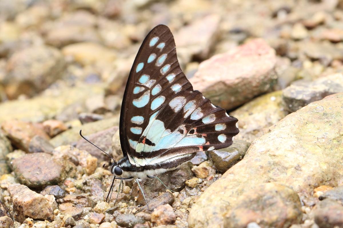 f:id:butterflyer:20200118232145j:plain