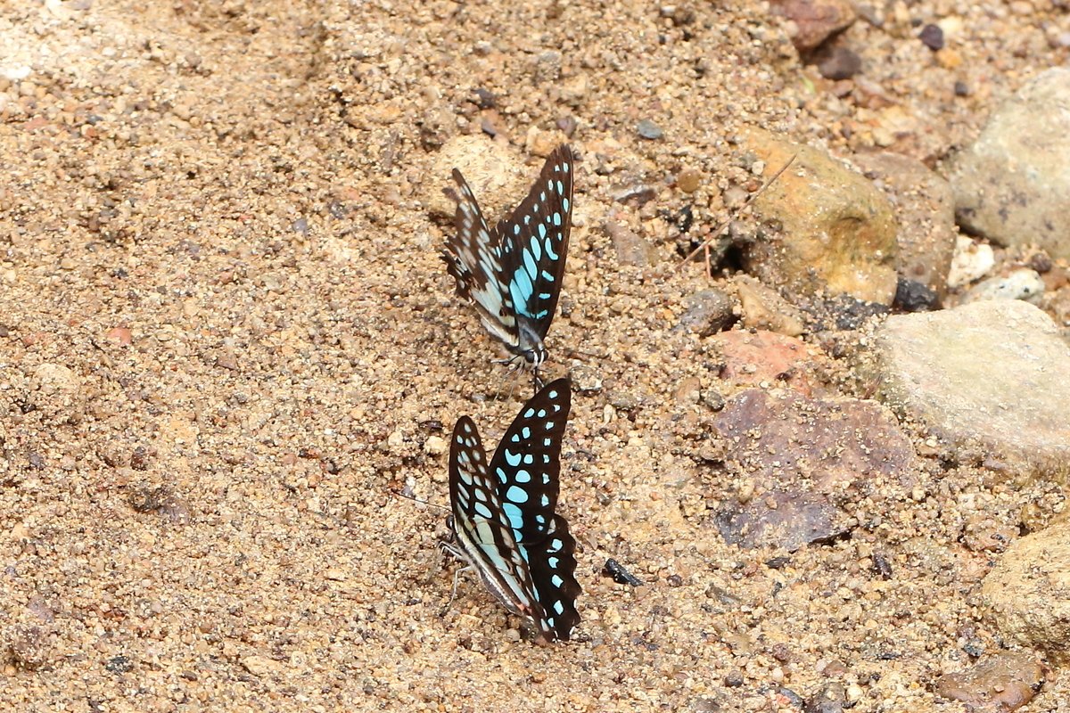 f:id:butterflyer:20200118232147j:plain