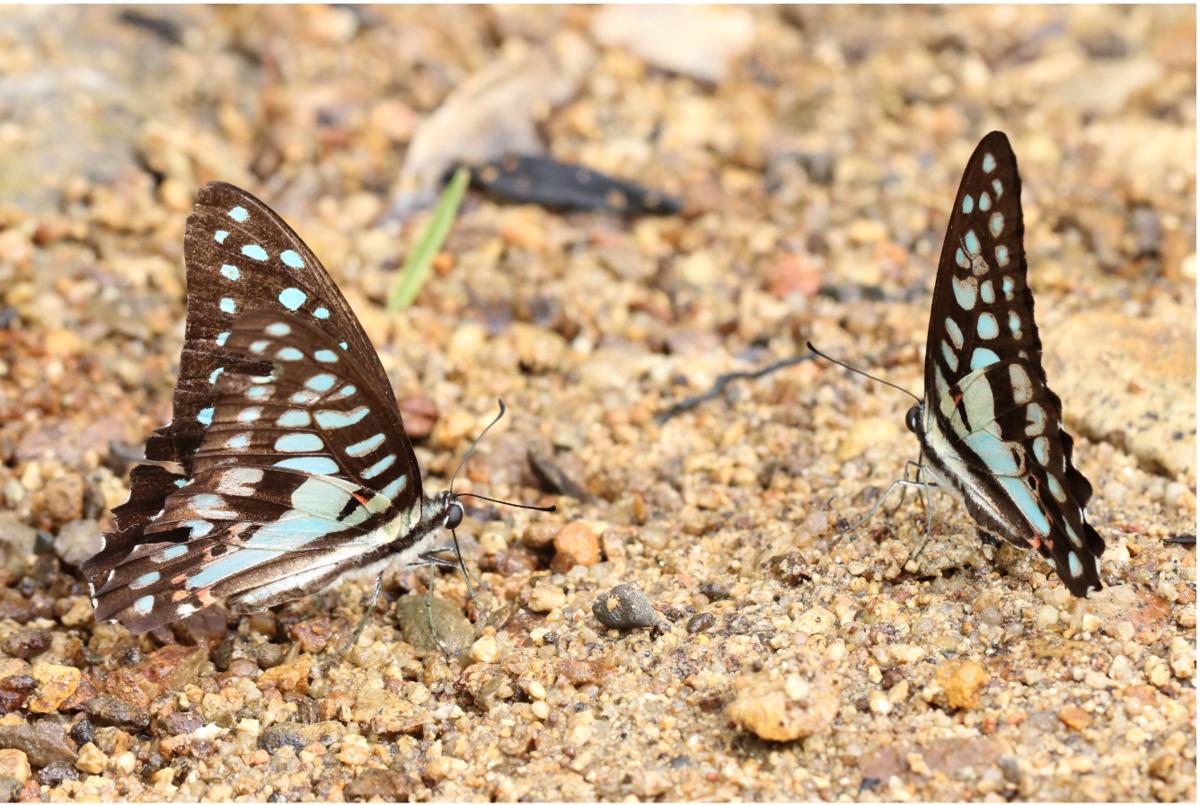 f:id:butterflyer:20200118232523p:plain