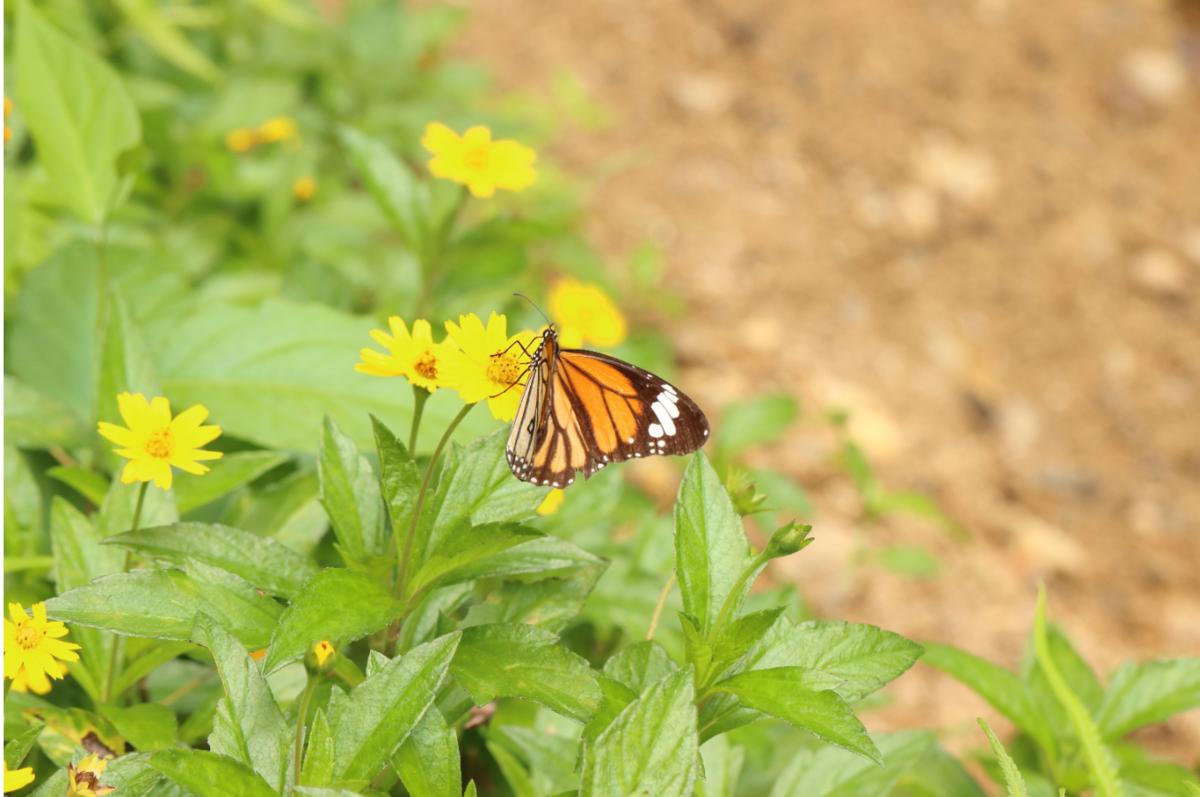 f:id:butterflyer:20200119000113p:plain