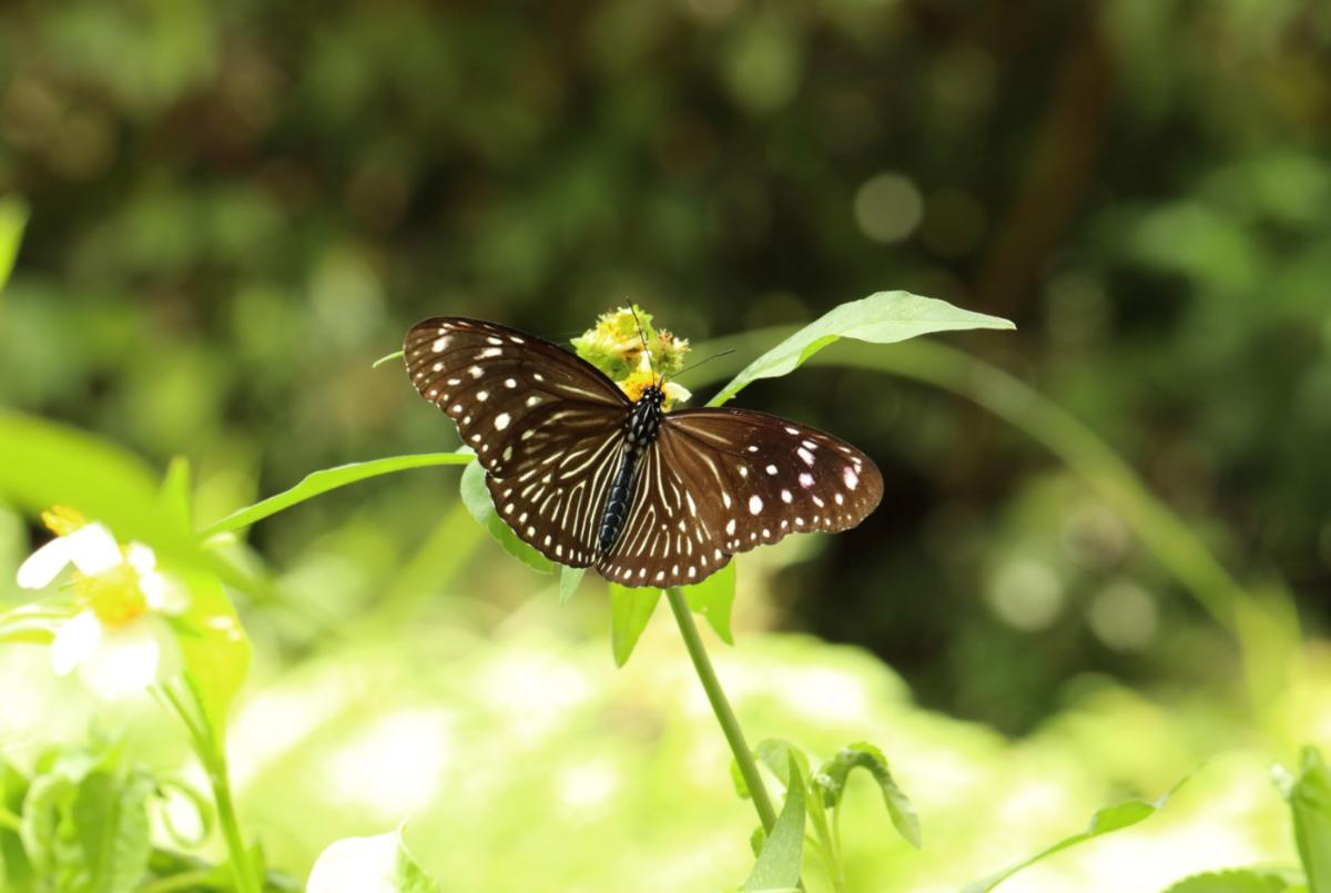 f:id:butterflyer:20200119000432p:plain