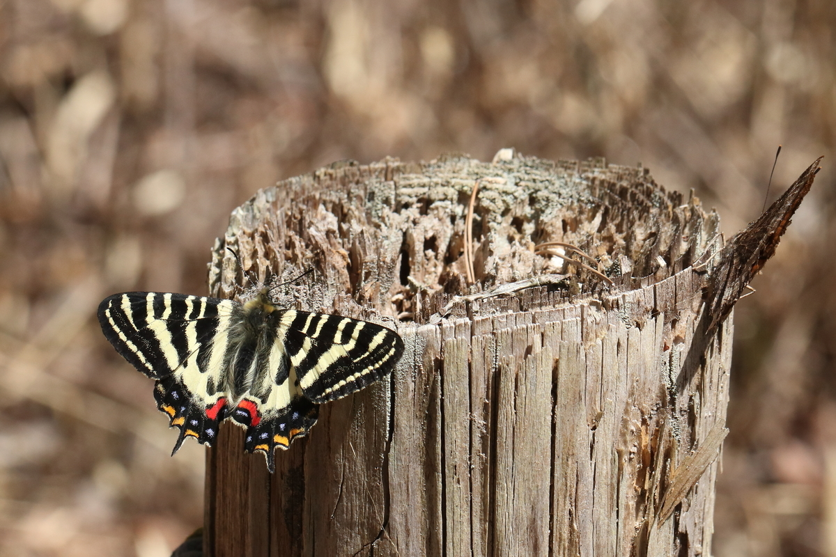 f:id:butterflyer:20200321180924j:plain