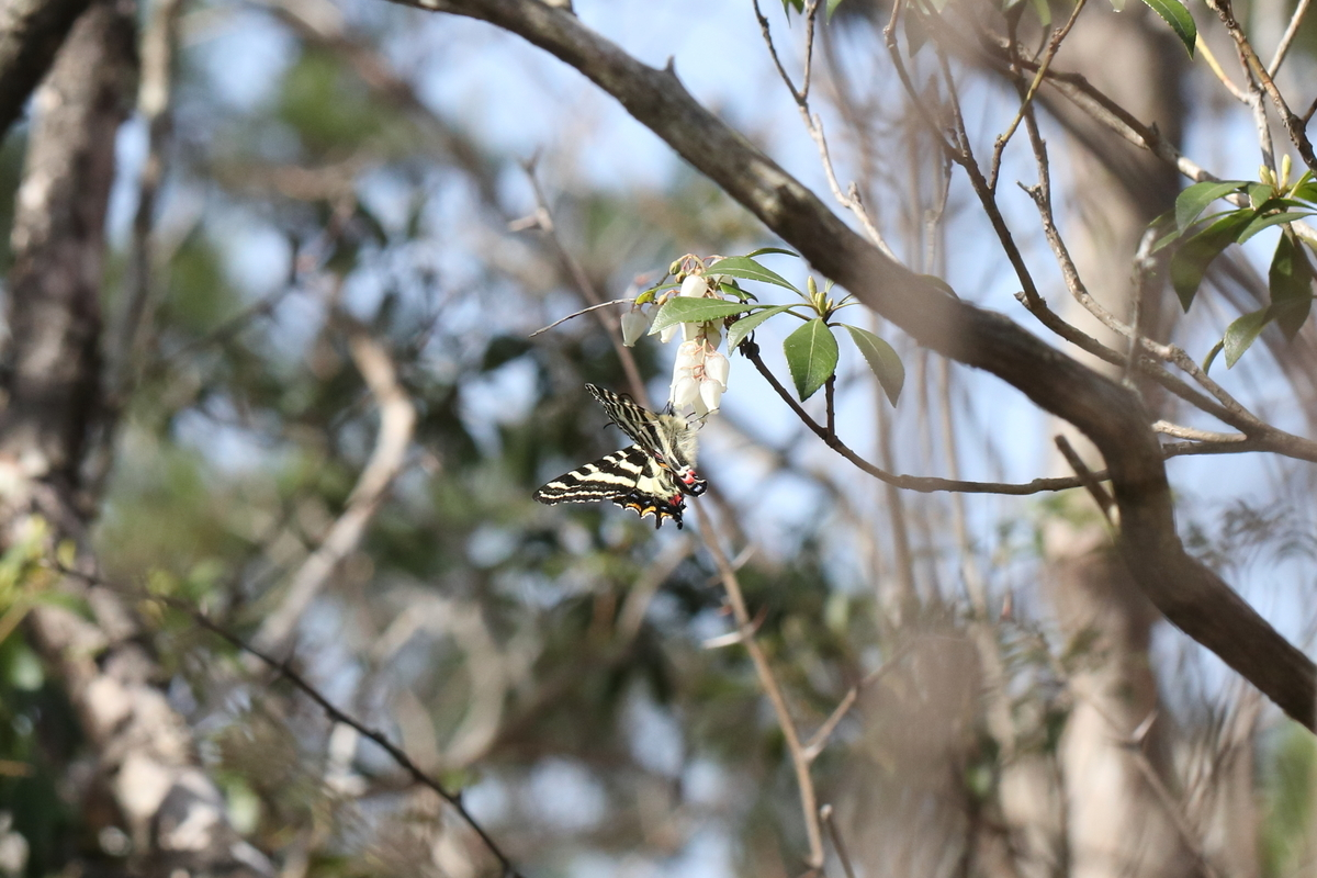 f:id:butterflyer:20200321183332j:plain