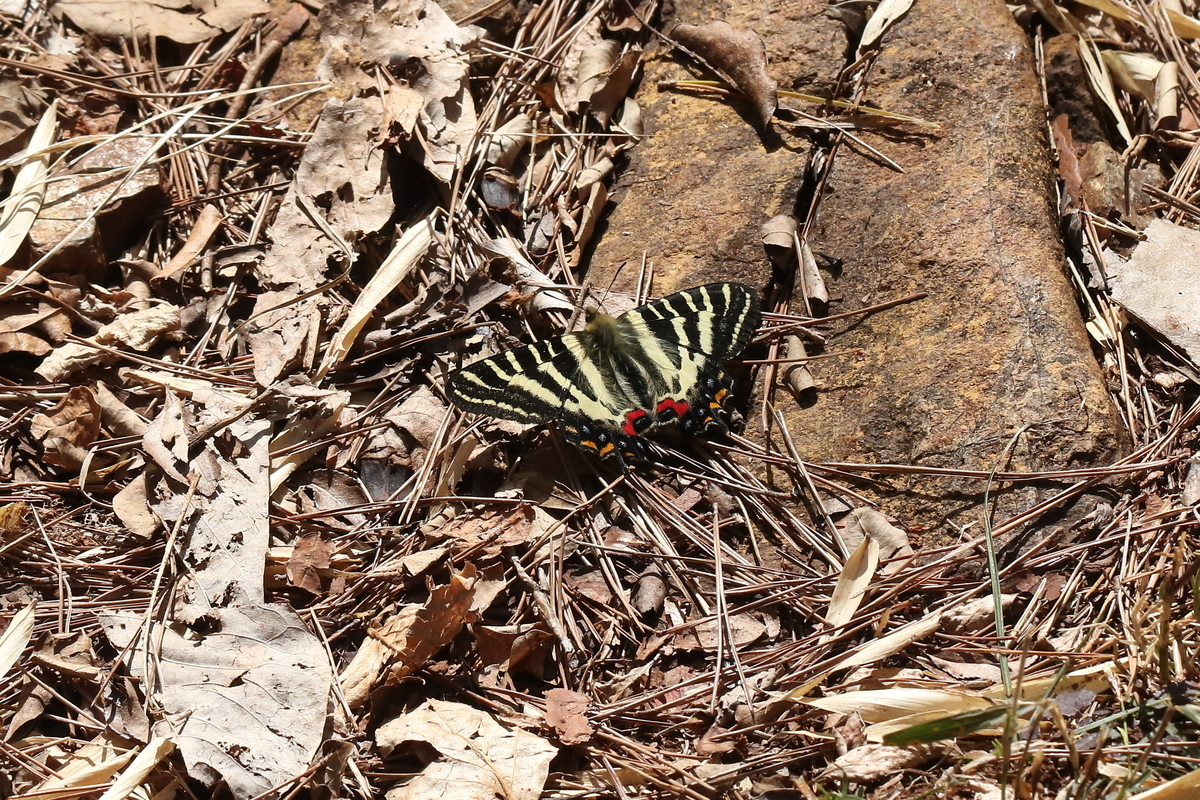 f:id:butterflyer:20200321183833j:plain