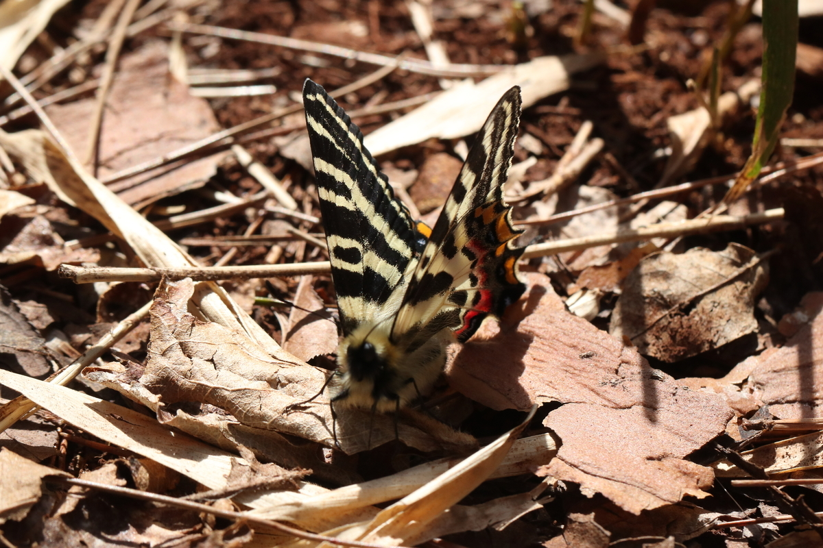 f:id:butterflyer:20200321184736j:plain