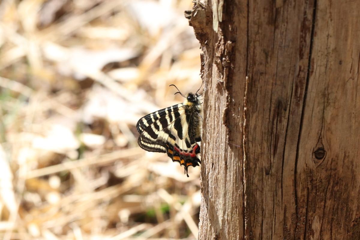 f:id:butterflyer:20200321184958j:plain