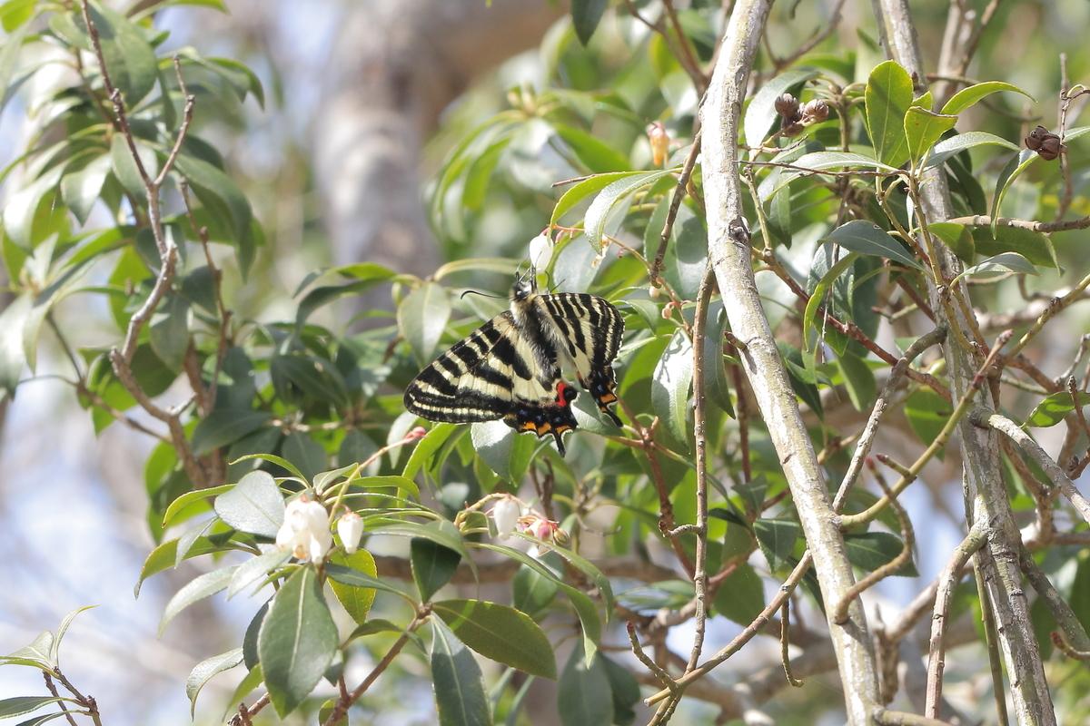 f:id:butterflyer:20200321185114j:plain