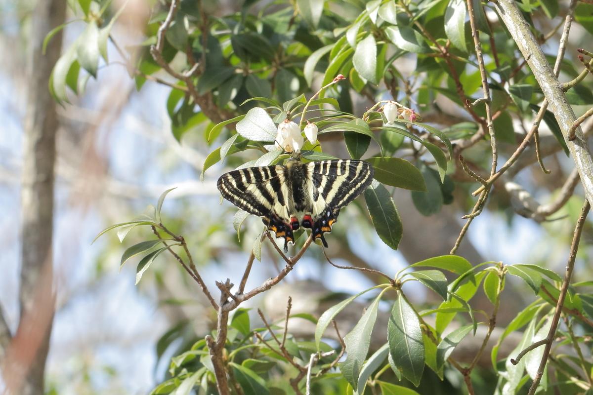 f:id:butterflyer:20200321185252j:plain
