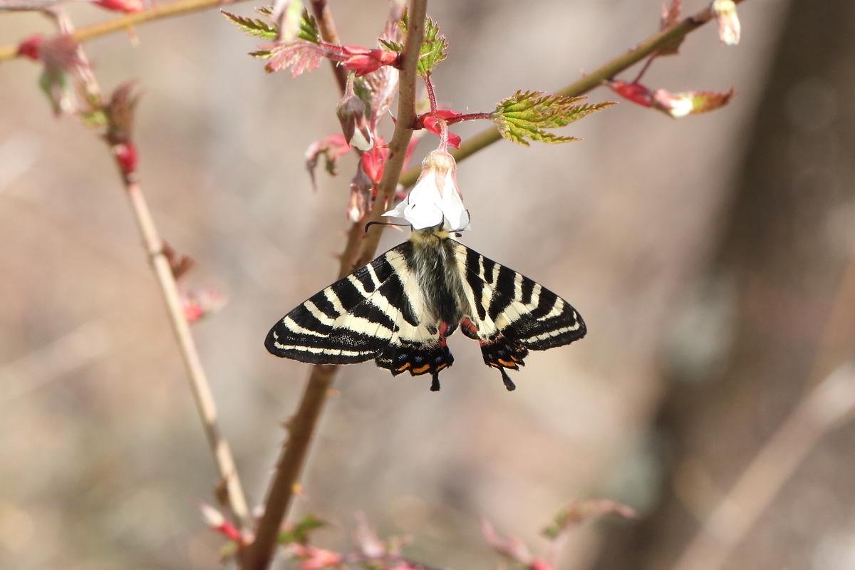 f:id:butterflyer:20200322142244j:plain