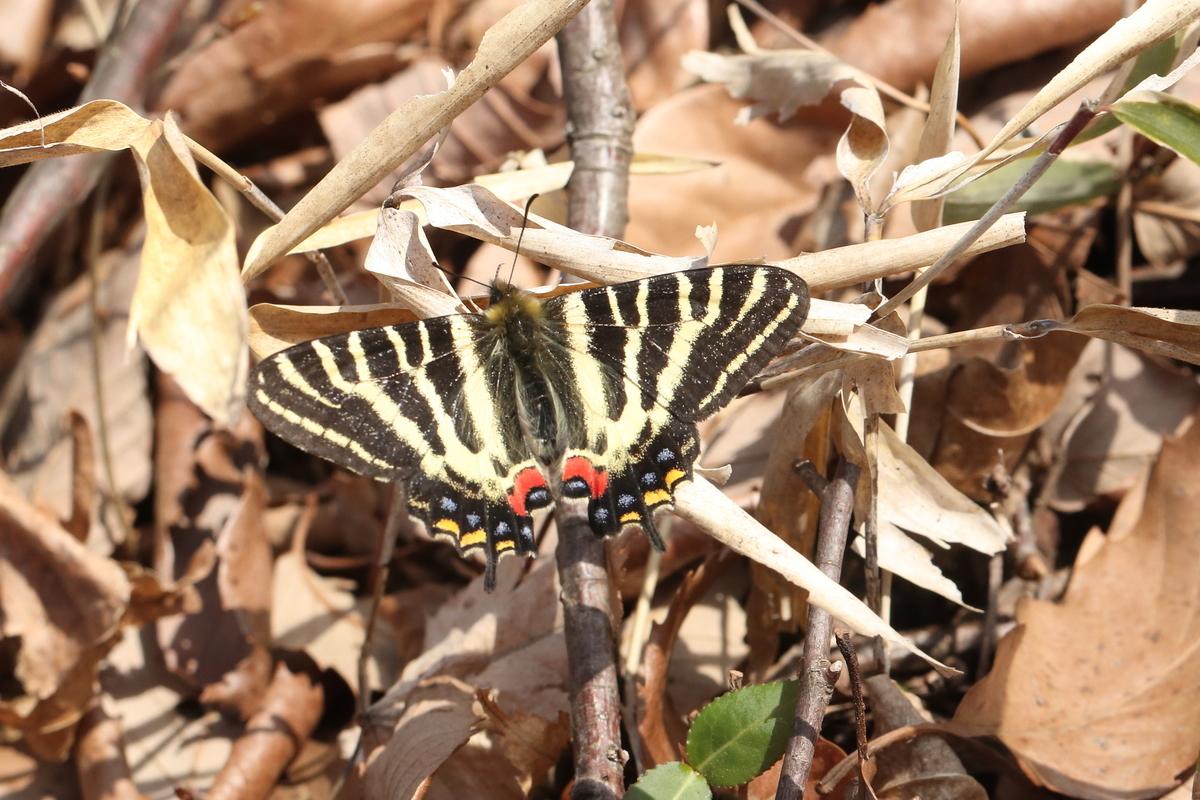 f:id:butterflyer:20200322143614j:plain