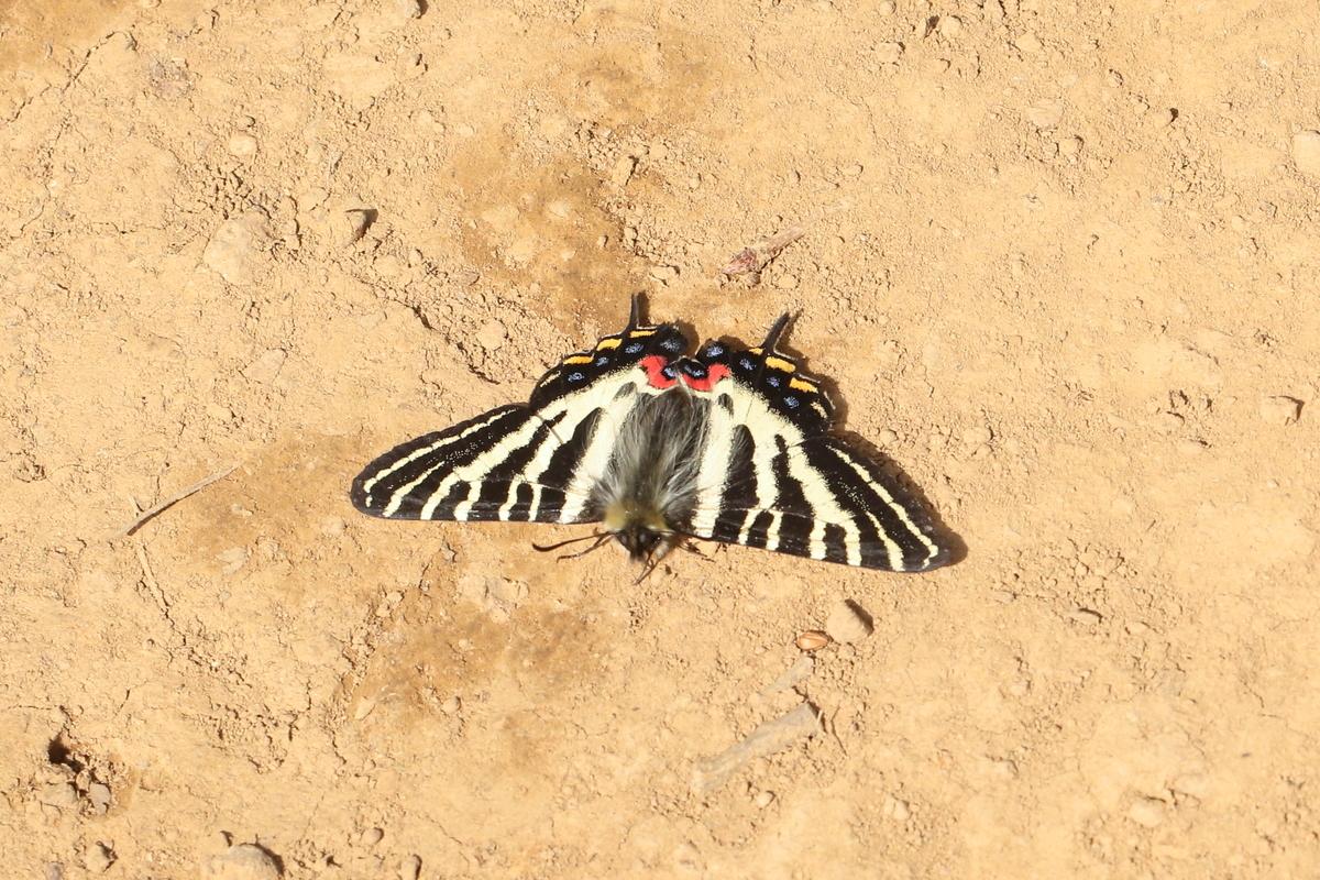 f:id:butterflyer:20200322143722j:plain