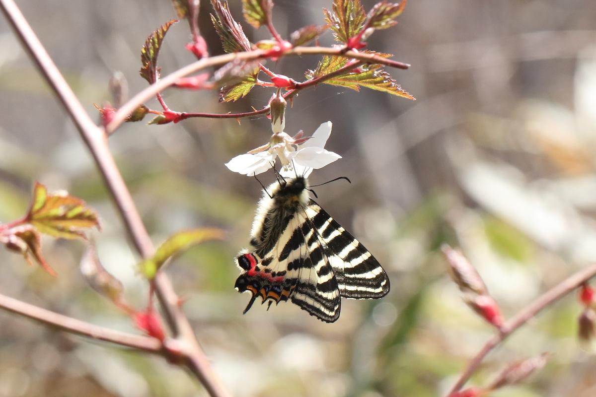 f:id:butterflyer:20200322144233j:plain