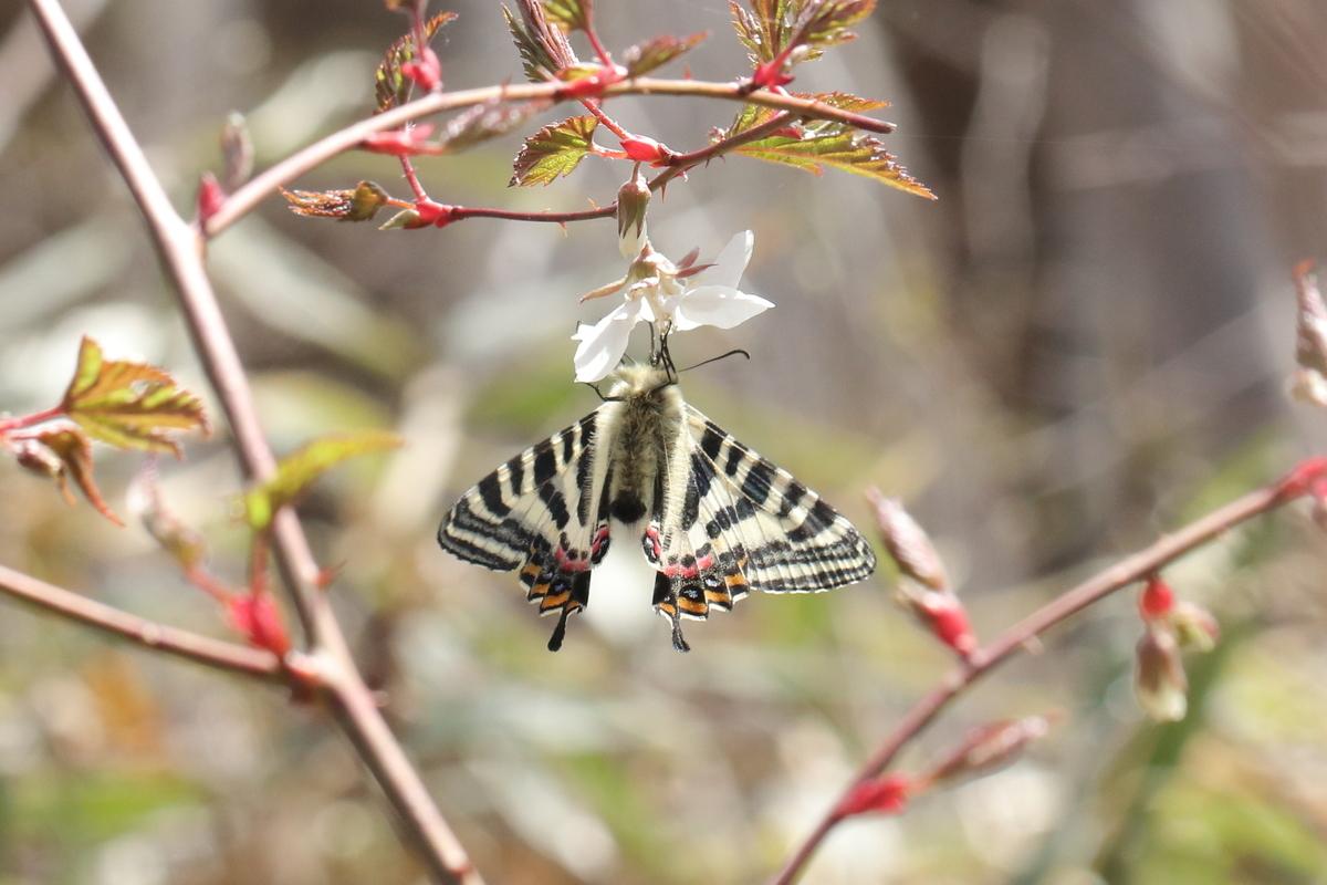 f:id:butterflyer:20200322144247j:plain