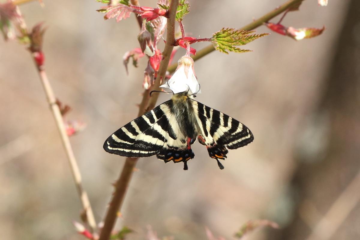 f:id:butterflyer:20200322144403j:plain