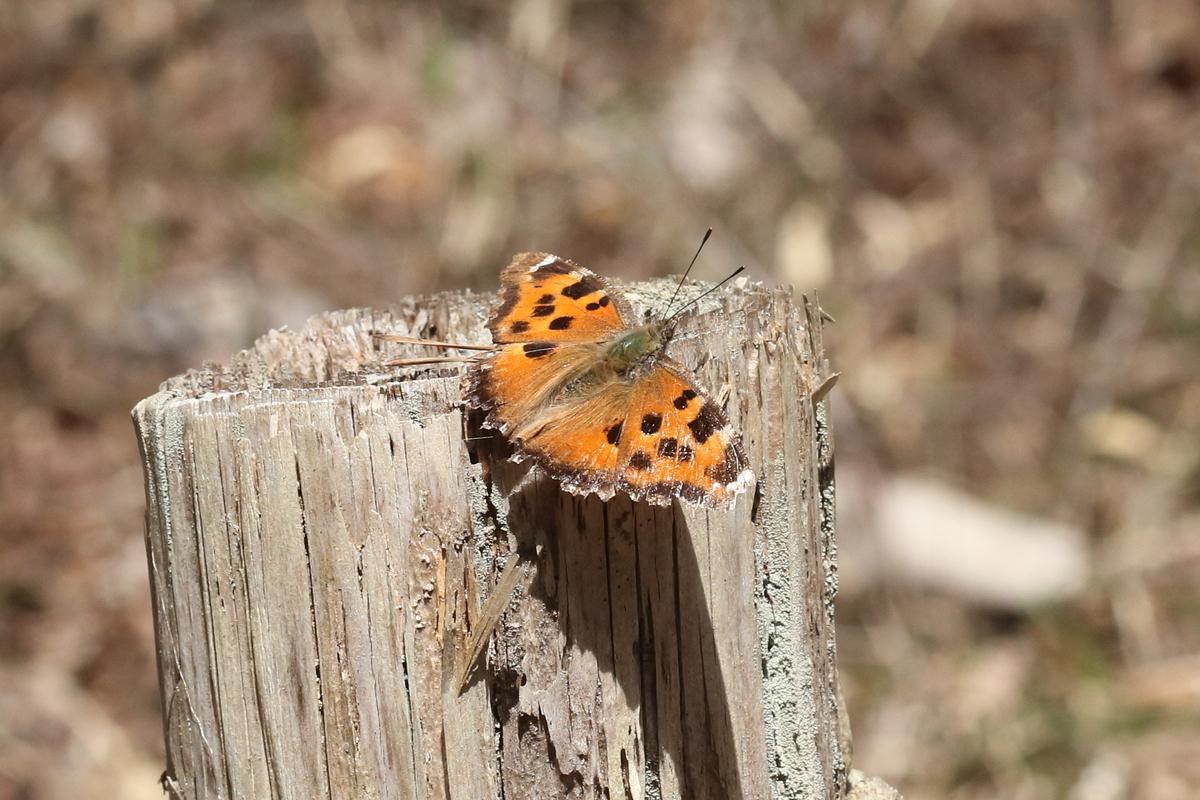f:id:butterflyer:20200323225220j:plain