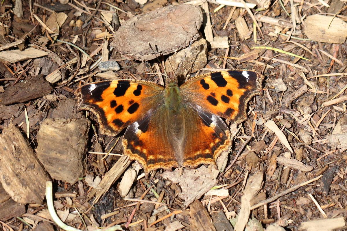 f:id:butterflyer:20200328195645j:plain