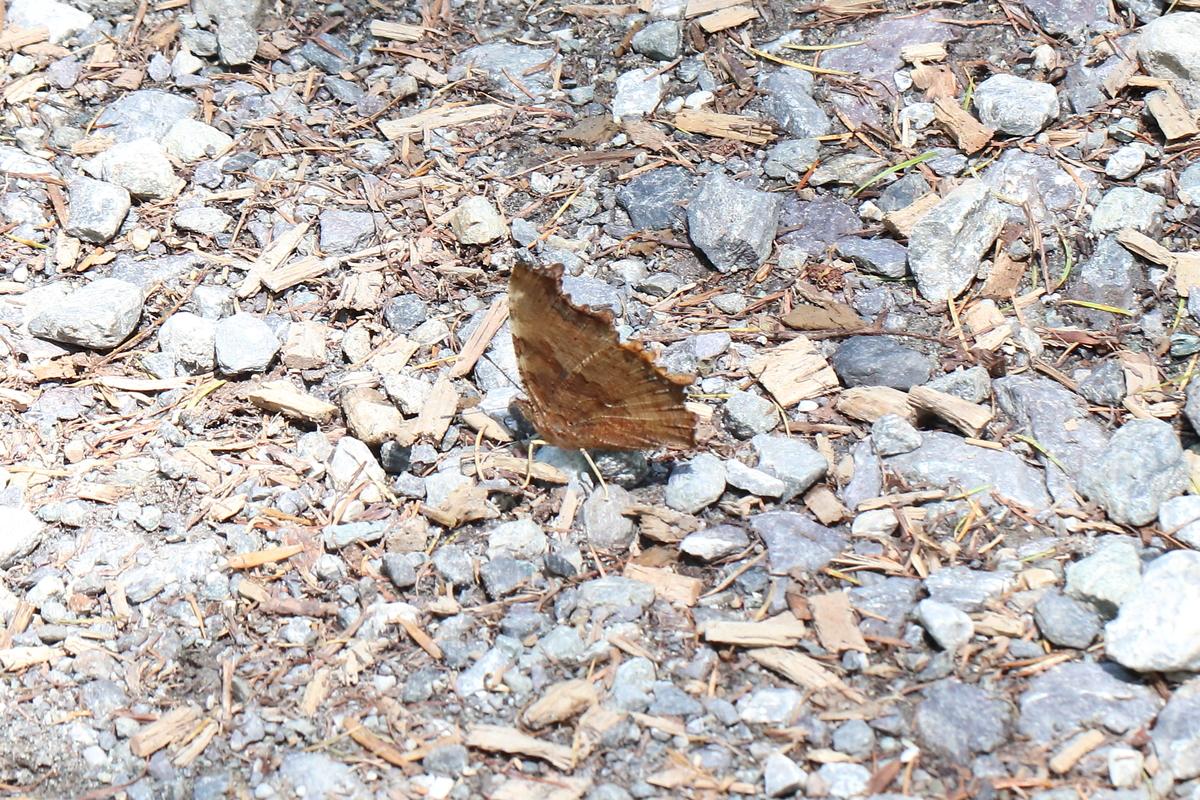 f:id:butterflyer:20200328202959j:plain