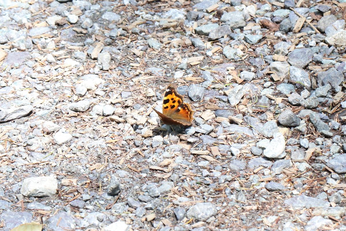 f:id:butterflyer:20200328203949j:plain