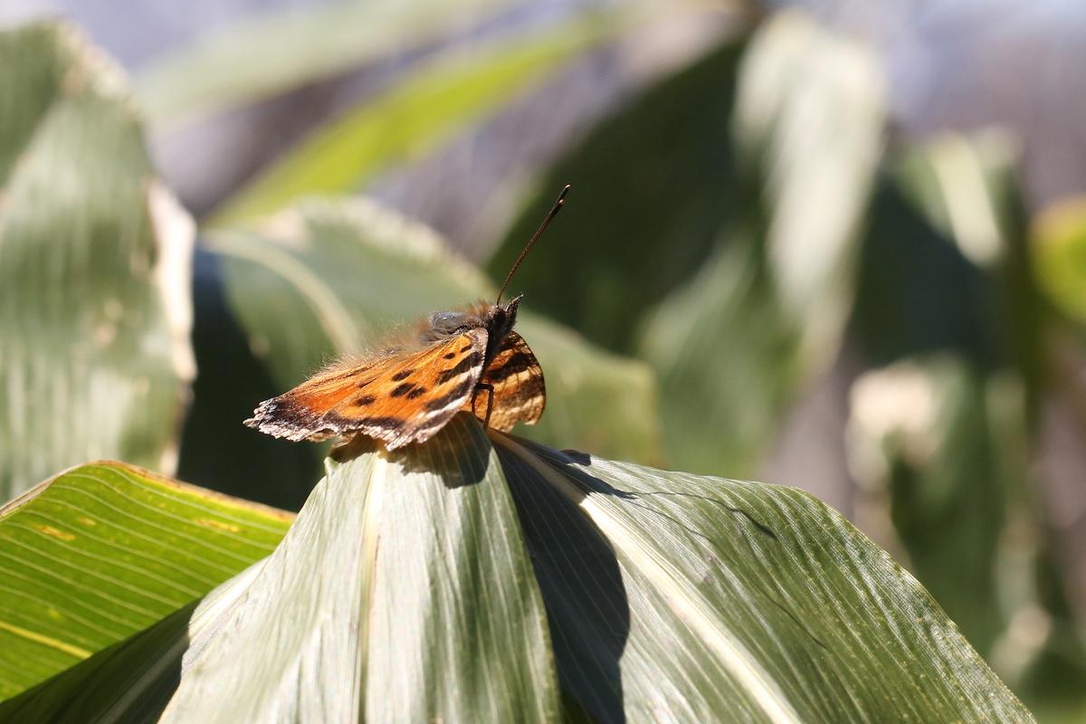 f:id:butterflyer:20200330213452j:plain