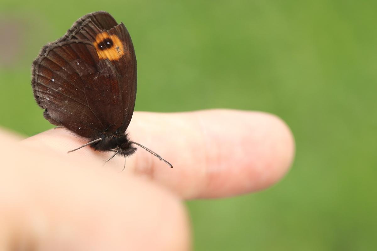 f:id:butterflyer:20200330215325j:plain