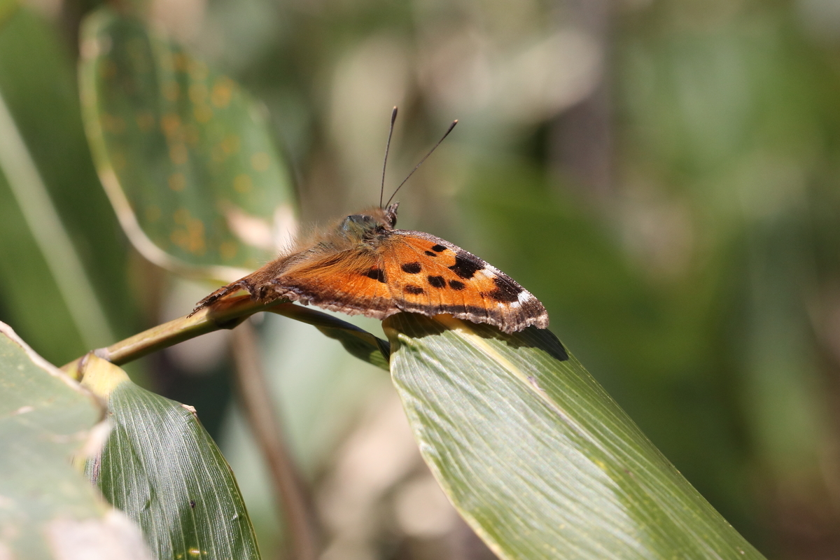 f:id:butterflyer:20200330215928j:plain