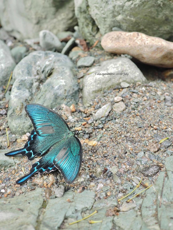 f:id:butterflytakaji:20200804015741j:image