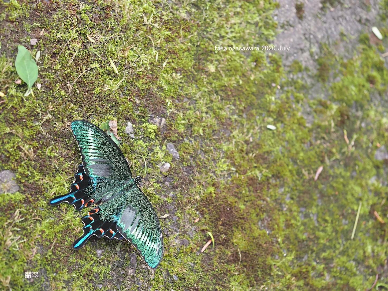 f:id:butterflytakaji:20200804020505j:image