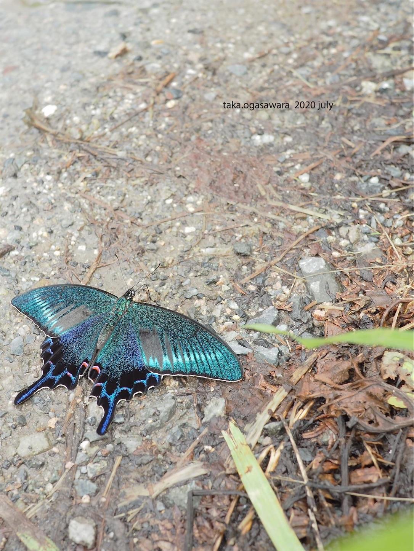 f:id:butterflytakaji:20200809034002j:image