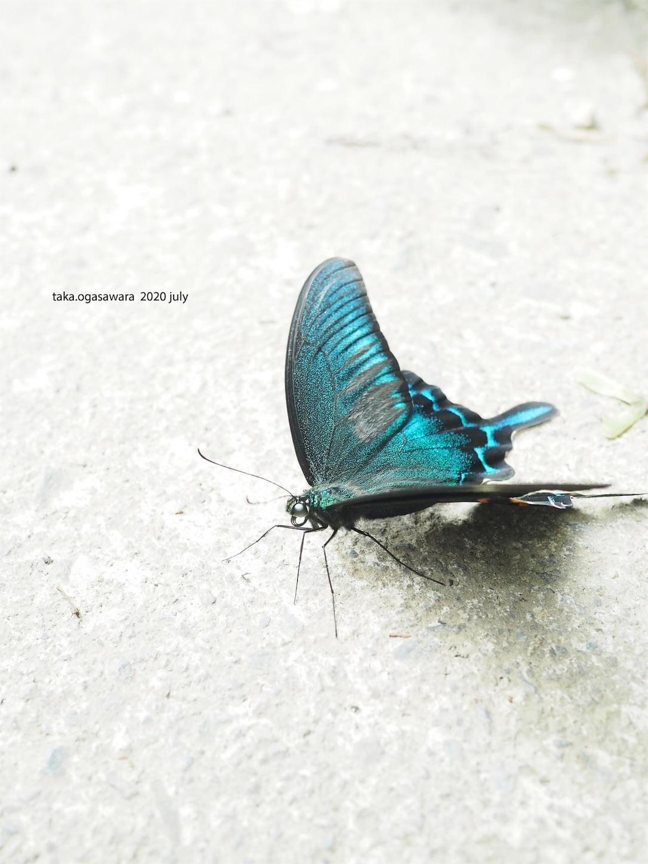 f:id:butterflytakaji:20200809034037j:image