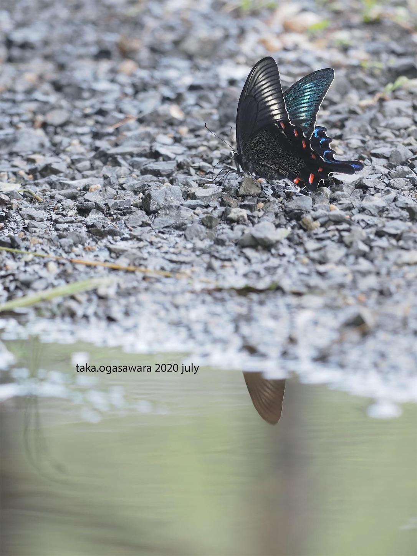 f:id:butterflytakaji:20200809034106j:image