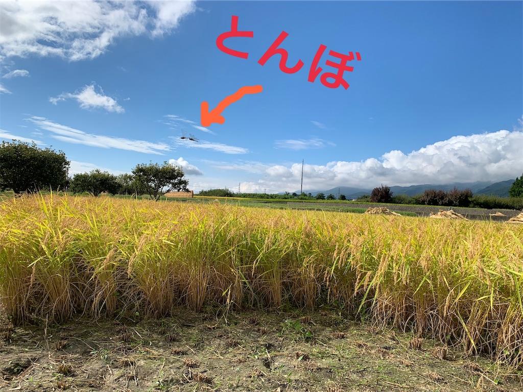 f:id:buu_baku:20190924085752j:image