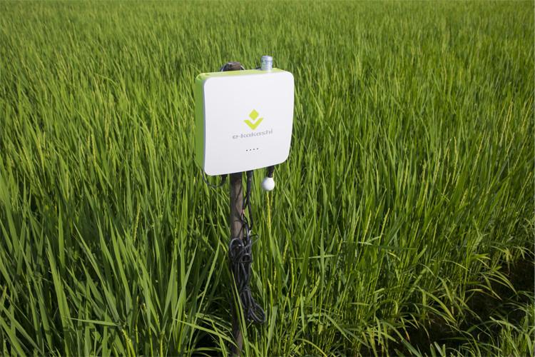 農業IoTソリューション「e-kakashi」とは?