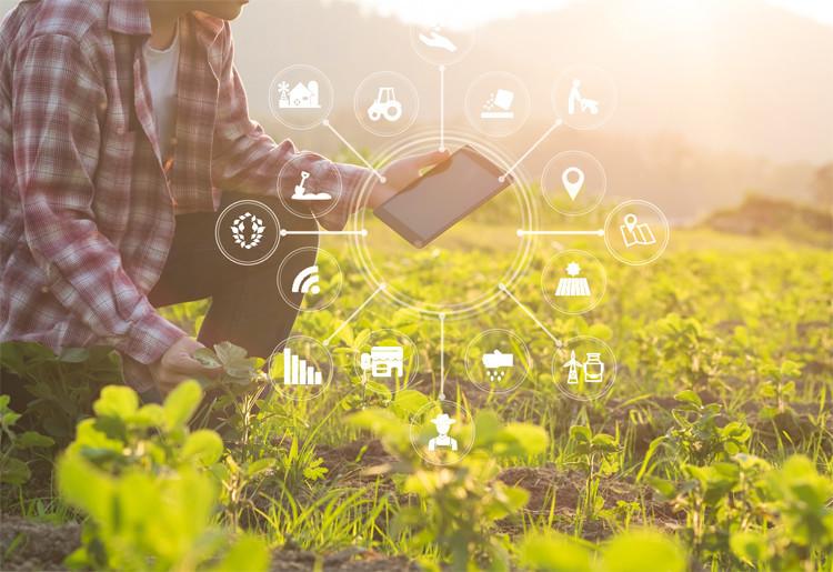 ソフトバンクの農業向けIoTソリューション「e-kakashi」