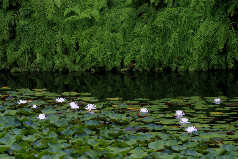 京都新聞写真コンテスト 静寂の池
