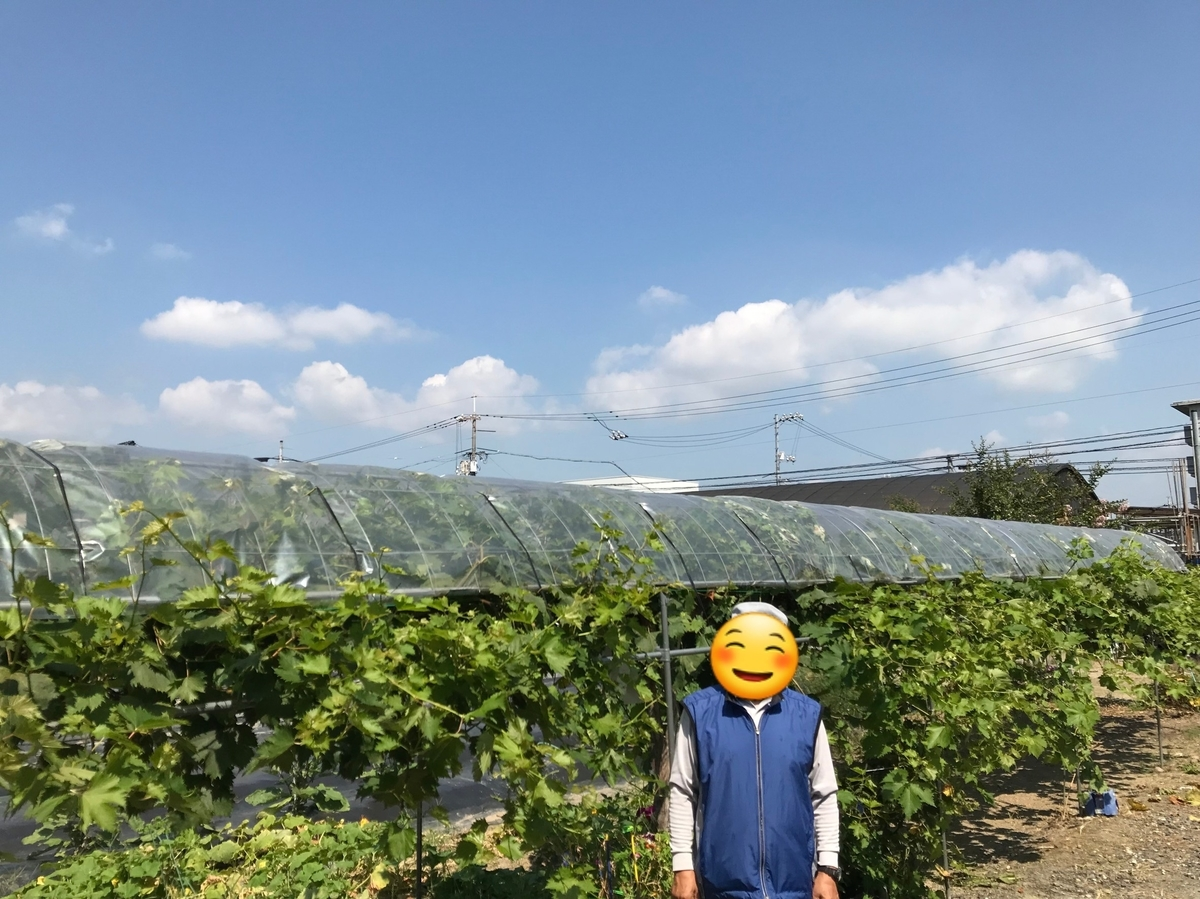 f:id:c-m-yorimichi:20210812173437j:plain