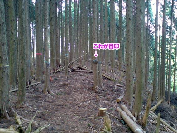 f:id:c-miya:20091230172403j:image:left:w240
