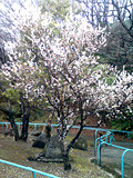 f:id:c-mizukawa:20090303173105j:image