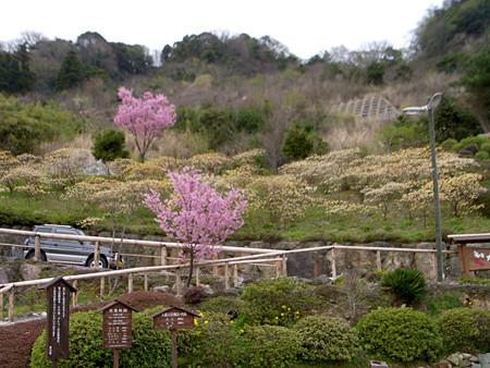 f:id:c-mizukawa:20090329142045j:image