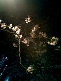 f:id:c-mizukawa:20090402233249j:image