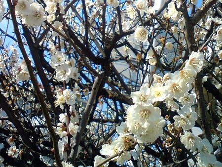 f:id:c-mizukawa:20100222135823j:image