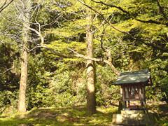 f:id:c-mizukawa:20100331115820j:image