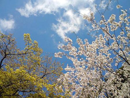f:id:c-mizukawa:20100420230425j:image